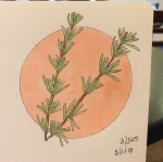 An illustration of a sprig of rosemary by Jessica Couture