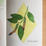 An illustration of a black peppercorn plant byJessica Couture