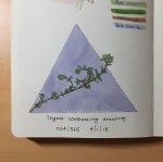 An illustration of a sprig of thyme by Jessica Couture