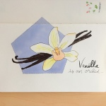 An illustration of a vanilla flower with vanilla beans by Jessica Couture