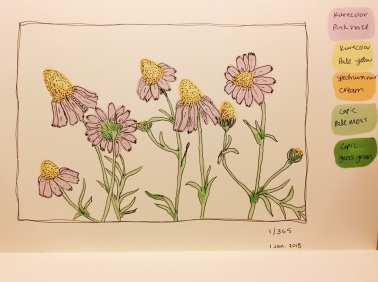 An illustration of daisies by Jessica Couture
